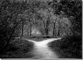 medium_diverging_paths